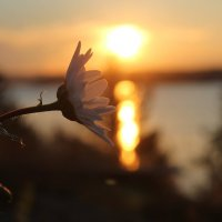 Закат на Онежском озере :: Avada Kedavra!
