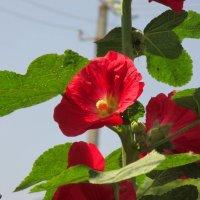 Яркое лето :: Нина Бутко