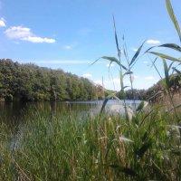 Озеро :: марина ковшова