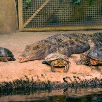 Крокодил :: Дмитрий Строж