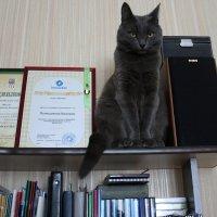 Дипломированный... :: Валерия  Полещикова