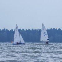 Белые кораблики :: Елена Баландина