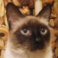 Умный кот :: татьяна