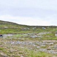 Пейзаж с оленем :: Инна Шолпо