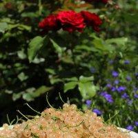 Белой смородины кисти янтарные :: Константин Строев