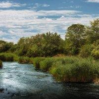 Пейзаж на мелководье :: Сергей Урюпин
