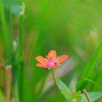 в траве :: Евгения Калугина