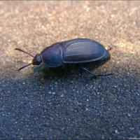 Бежал по дорожке жук :: °•●Елена●•° Аникина♀