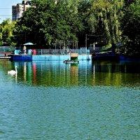 а белый лебедь на пруду... :: Александр Корчемный