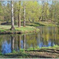 Весенний лес. :: Vadim WadimS67