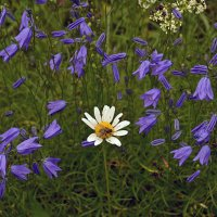Мухи тоже любят цветы :: Наталия П