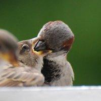 ))) :: linnud