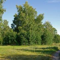 уральский лес :: pich