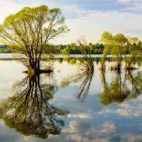 Отражения. На Озернинском водохранилище :: Павел Кочетов
