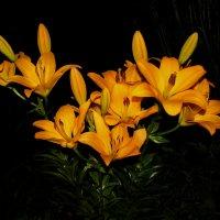 Лилии цветут. :: Маргарита ( Марта ) Дрожжина