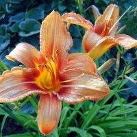 Про цветы . :: Мила Бовкун