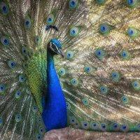Птичка :: Марина Назарова