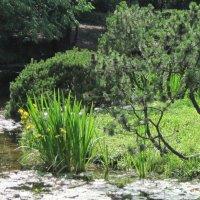 Японский сад :: Маера Урусова