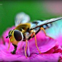 Вкусный цветок... :: Ирина Solo
