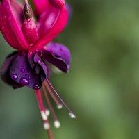 Капли воды и цветке! :: Эрик