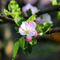 Весна :: Алеся Старовойт