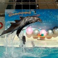Коктебельский дельфинарий :: Ирина Фирсова