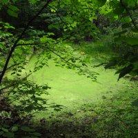 Еще одно любимое болотце с кикиморами :: Андрей Лукьянов