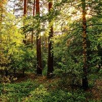 Садится уставшее солнце... :: Лесо-Вед (Баранов)