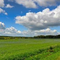 Плывут облака над полем :: Милешкин Владимир Алексеевич