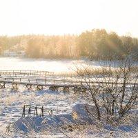Зимний рассвет :: Антонина Говор