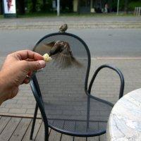 Колибри колибри... есть очень хочется :: Oleg Mechetin