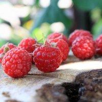 Raspberries :: Денис Маншилин