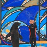 Ламбада в исполнении молоденькой морской львицы Лизы.Сочинский дельфинарий. :: Vladimir 070549