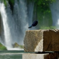 Стрекоза на фоне водопада :: Михаил Рогожин