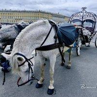 ПОКЛОН В КОПЫТА. Понимая приближение праздника фотографа. :: Виталий Половинко