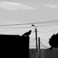 Силуэт птицы на фоне проводов :: Николай Филоненко