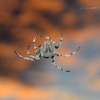Из жизни пауков. :: Поток