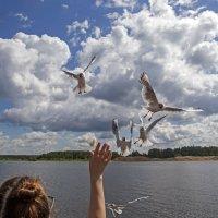 Внучка, чайки, небо........ :: Сергей Израилев