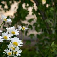 Одно мгновение из жизни бабочки... :: Виктор М