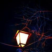 Уличный свет :: Мария Гриднева