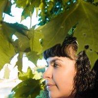 Сквозь листву :: Антонина Говор