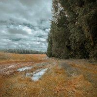 После  дождя :: Ира Петрова