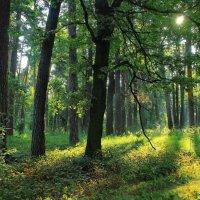 Росистым солнцем пахнет тишина... :: Лесо-Вед (Баранов)