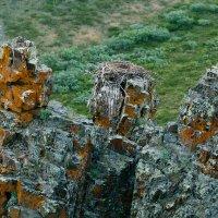 Гнездо на скалах. :: Юрий Харченко