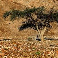 В пустыне... :: Alex S.