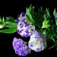 Цветы :: Татьяна Евдокимова