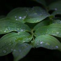 После дождя. :: Андрей Самсонов