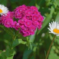 К цветку цветок :: Анатолий Иргл