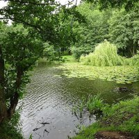 Зеленоградск, плакучая ива над озером :: Маргарита Батырева