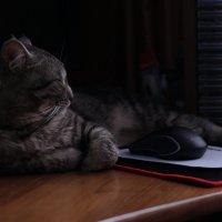 Кошки-мышки :: Вадим *